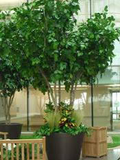 We used reaistic faux foliage to create a serene, low maintenance garden for the Willowbrook Methodist hospital in Houston, Texas.