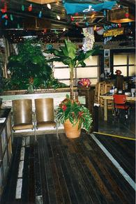 A part of the foliage interiorscaping done for Joe's Crab Shack.