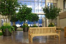 The Willowbrook Methodist Hospital in Houston Texas wanted a relaxing, serene place for their staff and patients to wind down after a long day at work...so Theme Designs Studios gave them their a private indoor park!